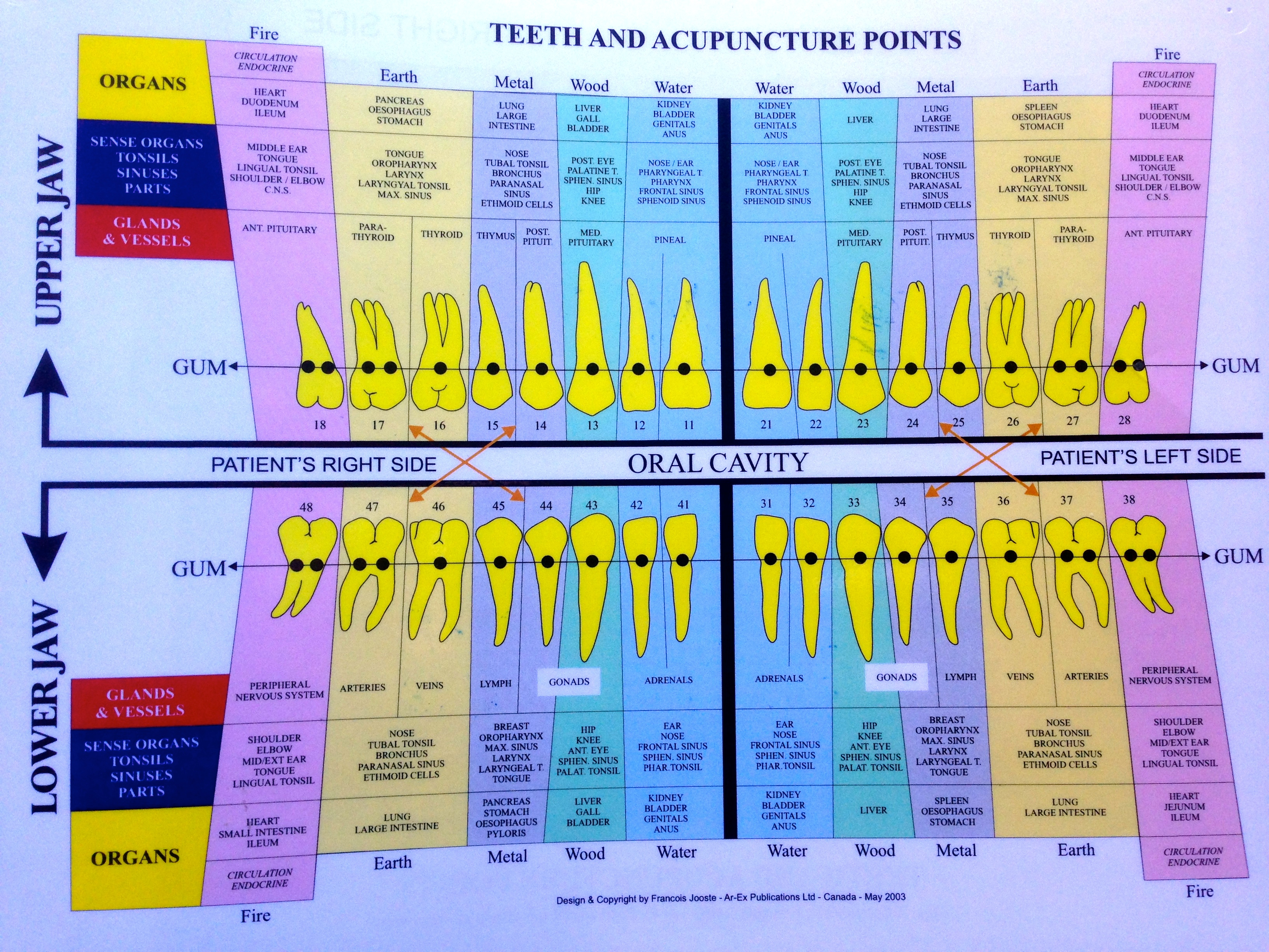Tooth Charts Emotions Google Search Tooth Chart Wisdom Teeth Acupuncture Points